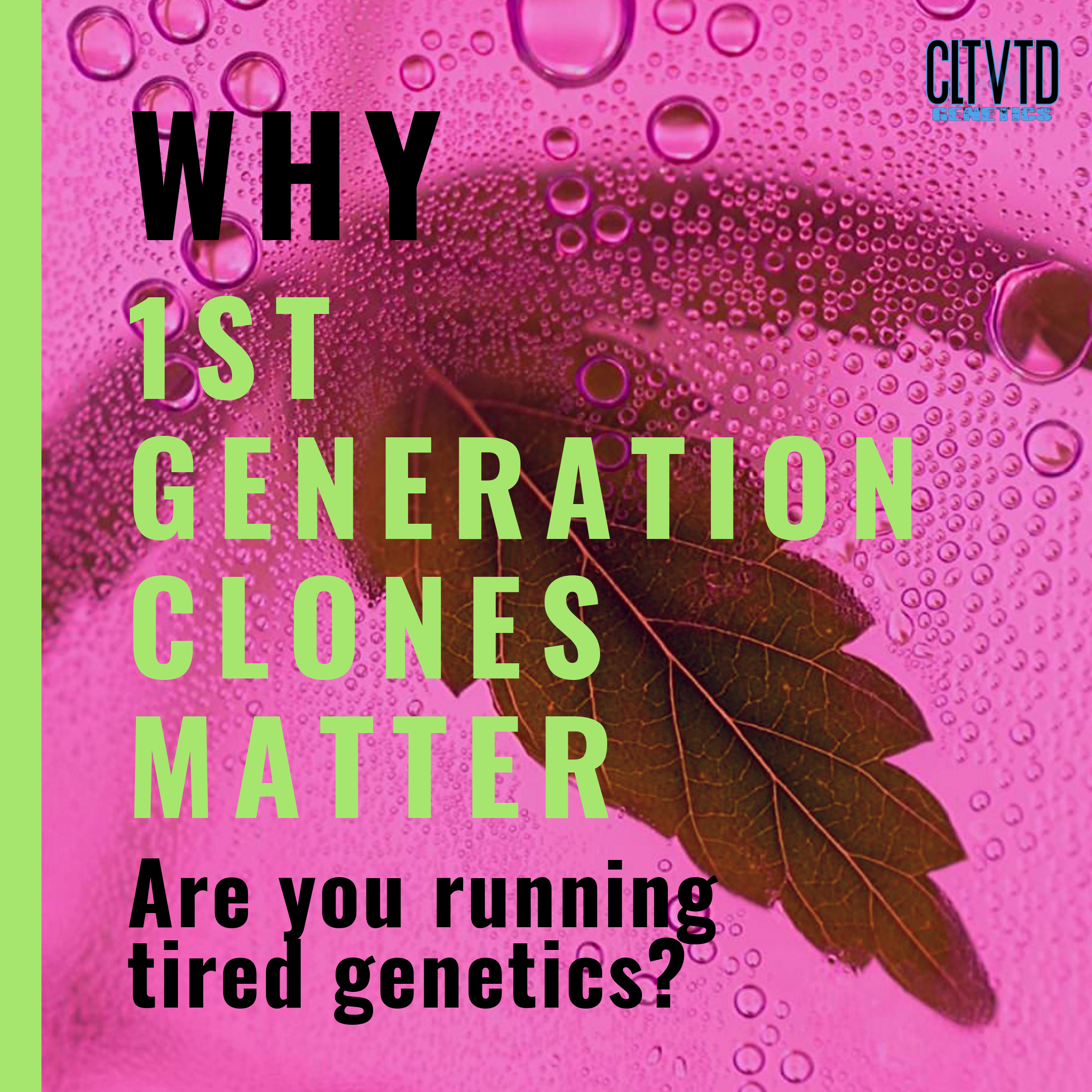 Why 1st Generation Clones Matter